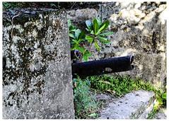 Gun Found At Gun Beach (swanksalot) Tags: guam gun ww2 gunbeach decay remnant tweeted