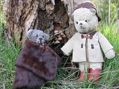 Paddington and the Faerie Toadstools 3. (raaen99) Tags: paddington paddingtonbear paddybear paddy teddy teddybear bear softtoy vintage vintageteddy vintageteddybear vintagetoy handmade softie plush cute cuddly soft present gift wrapping ribbon box bow scout scoutbear cuddle hug littlebearhug biglittlebearhug knitting knitted knittedtoy fairtrade fairtradebear scouthouse mink collar minkcollar fur minkfur minkfurcollar pelt minkpelt 1930s 30s wrap vintagefur vintagefurcollar vintageminkfurcollar stanleypark waterfallpaddock paddock park recreation australian australiana nativeflora nativetree gum gumtree fern nature mountmacedon macedon victoria australia salisburyrd salisburyroad bushland australianbushland toadstool faerietoadstool fairytoadstool