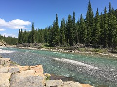 Happy Tree-Mendous Tuesday Folks (Mr. Happy Face - Peace :)) Tags: nature river sheep trees forest art2019 scenery landscape heartland albertabound canada cans2s glacier waters cold summer sky clouds hiking