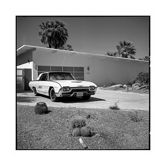 postcard • palm springs, ca • 2018 (lem's) Tags: classic car automobile house maison palm trees palmiers springs ca california desert rolleiflex t ford thunderbird midcentury architecture