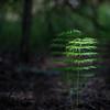 Lueur dans la forêt sombre (sosivov) Tags: sweden forest plant equisetum squareformat square green