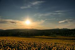 L'éclat du soir (Croc'odile67) Tags: nikon d3300 sigma contemporary 18200dcoshsmc paysage landscape ciel sky coucherdesoleil sunset