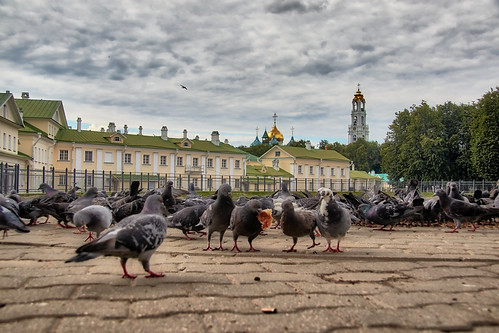 Square with pigeons