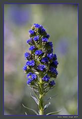 (cienne45) Tags: carlonatale cienne45 natale genoa liguria italy flowers