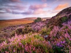 Monts d'Arrée (Soregral) Tags: montsdarrée brittany paysage sunrise ciel flower cloud nuage sky fleur bretagne flore bruyère fauneetflore