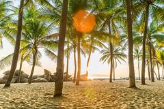 _Y2U4058-64.0719.Cửa Đại.Hội An.Quảng Nam (hoanglongphoto) Tags: asia asian vietnam landscape scenery vietnamlandscape vietnamscenery hoianlandscape morning sunny sunnymorning trees canon canoneos1dx canonef2470mmf28liiusm quảngnam hộian cửađại buổisáng nắng nắngsớm câydừa rừngdừa nắngxiên bãicát bãitắmcửađại bãibiểncửađại cuadaibeach sea biển coconuttrees eastsea sands sandbank biểnđông sunlight