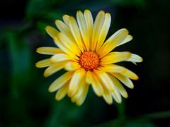 (Alexx053) Tags: flower garden closeup helios442