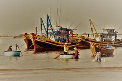 _DSC1337 (Tartarin2009) Tags: vietnam muine voyage travel bâteau boat fishermen pêcheurs mer sea seascape bamboo bambooboat gold or golden doré aube sunrise nikon d600 eau water waterscape harbour fish poisson