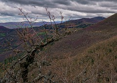 O Courel Devesa de Rogueira 3 (Jano_Calvo) Tags: seoane a6000 tree rural ilce chestnut 1650mm courel flowers perspective colourful devesa forest galicia clouds lugo mountains countryside mirrorless nature folgoso landscape trees ourense alpha sony rogueira