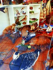 Shop Window, Scarborough, North Yorkshire, UK (photphobia) Tags: scarborough seasidetown northridingofyorkshire coast yorkshire england uk europe oldtown oldwivestale street streetphotos