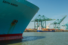 2019 07 22 Edith Maersk and Endurance_DVL3318 (larry_antwerp) Tags: edithmaersk 9321548 mpet psa antwerp antwerpen 安特卫普 安特衞普 アントウェルペン אנטוורפן 안트베르펜 أنتويرب port 港口 海港 פארט 港湾 항구 بندر ميناء belgium belgië belgie 比利时 比利時 бельгия ベルギー בלגיה बेल्जियम 벨기에 بلژیک بلجيكا schip ship vessel 船 船舶 אונייה जलयान 선박 کشتی سفينة