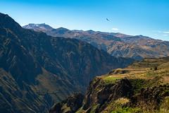 Colca Canyon (ben_leash) Tags: colcacanyon peru landscape canyon bird mountains latinamerica southamerica cliffs
