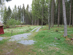 Next to the cabins at the end of Langnesveien. (mtbboy1993) Tags: lagnes gravel grus askim indreøstfold østfold glomma forest skog flowers grass trees norway norge langnesveien