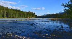 DSC_0436.jpg hd (dharmesh1232001) Tags: canada jasper river canadianrocky mountain pinetree