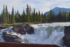 DSC_0506 (dharmesh1232001) Tags: waterfall athbasca jasper canada mountain canadianrocky ivefieldparkway river