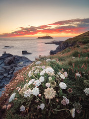 Godrevy Flowers (Timothy Gilbert) Tags: lighthouse wideangle sunset godrevy panasonic laowacompactdreamer75mmf20 rocks gwithian beach godrevyheritagecoast m43 microfourthirds microfournerds gx8 lovecornwall coast cornwall lumix