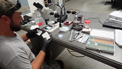 Processing fish scale samples
