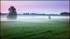 Dimmon (Jonas Thomén) Tags: fog dimma mist filed åker lindo träd tree trees gräs grass morning morgon purple lila green grönt