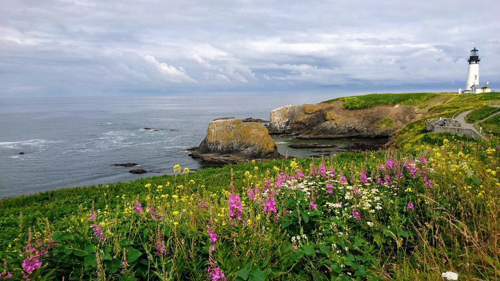 Oregon Coast wildflowers