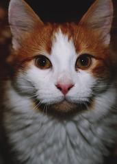 cat portrait (sarrajaoui13) Tags: mksnta old portrait pet cute animal cat photography kitten artistic throwback