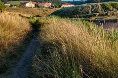 Camino en Verdicio (ccc.39) Tags: asturias verdicio camino hierba atardecer gozón path sunset