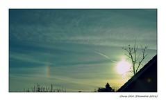 [ Calm dawn ] (Chris Séhenna) Tags: ciel sky cielo aube sunrise amanecer silhouette silueta branches ramas oiseaux birds pájaros parhélie sundog parhelio nuages clouds nube soleil sun sol alizbar
