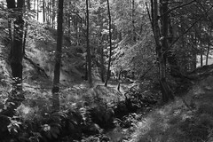 WoodedClough (Tony Tooth) Tags: woodland nikon sigma clough 1750mm d7100 cloughbrook blackandwhite bw monochrome cheshire wildboarclough