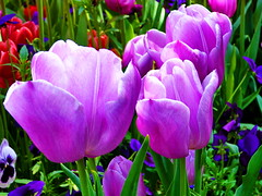 The Wonderful Flowers of Tehran, Iran (23.04.2013) (The Very Best of Yuri Novitsky) Tags: yurinovitsky jurijnowicki юрийновицкий flower flowers iran tehran nature