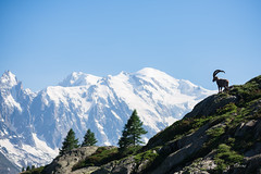 Warden of the Mont Blanc (Fab Boone Photo) Tags: vert mountain montagne montblanc mont blanc france chamonix massif massifdumontblanc nature landscape fraench french alps alpes francaises fabien boone fabboone fabboonephoto fab photo fabienboonephoto fabienboone coulors naturelovergr naturephotography photography