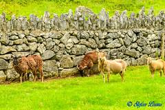DSC_3374 (Salmix_ie) Tags: craggaunowen kilmurry county clare ireland 16th century castle 1550 john macsioda macnamara an archaeological open air museum nikon nikkor d500 july 2019