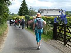 UK - Kent - Near Chilham - Walking along road (JulesFoto) Tags: uk england kent ramblers capitalwalkers chilham walking