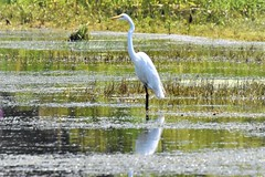 DSC_5443 (adamsdale616) Tags: northern color beauty nature animal wildlife outdoor waterfront wisconsin • dusk autumn golden water pond sky light new usa spring summer animals birds midwest colorful landscape nikon d7200 reflection detail closeup