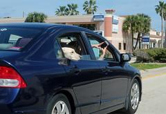 Taking a Portrait of her Dog - Orlando, Florida (TravelsWithDan) Tags: candid car photographer portrait dog street city urban orlando florida usa portraittaking outdoors lab