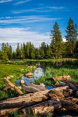 Mirror Lake meadow (laughlinc) Tags: uintahmountains nikon7200 utah uintah lake landscape laughlinc mirrorlake