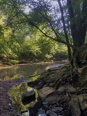 Shoreside (phthaloblu) Tags: rocks water roots trees reedyforkcreek usa northcarolina nc guilfordcounty mcleansville boldmoonpreserve