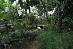 (sftrajan) Tags: grandesserres greenhouse botanicalgarden lyon parcdelatêtedor france jardinbotaniquedelyon jardinbotanico conservatory botany lyonbotanicgarden