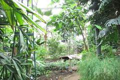 (sftrajan) Tags: parcdelatêtedor lyon france grandesserres invernadero glasshouse hothouse lyonbotanicgarden serre jardinbotanico francia jardinbotaniquedelyon botany