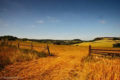 Sommer /2 (günter mengedoth) Tags: pentaxhddfa2470mmf28edsdmwr pentax hd dfa 2470mm f28 ed sdm wr pentaxk1 pk landschaft feld zaun wiese gerste gras himmel