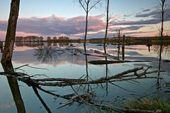 Calma (pascual 53) Tags: eos5ds canon 1635mm laguna calma reflejos colores ocaso nubes ablitas navarra largaexpo leña troncos desastres vientos