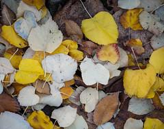 Terminus.jpg (Klaus Ressmann) Tags: klaus ressmann omd em1 abstract fparis france leaves montparnass nature winter cemetery decay design flcabsnat softtones klausressmann omdem1