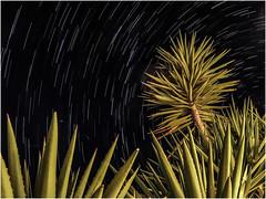 crete summer night stars (genelabo) Tags: aloe vera kaktus palm cactus karpoúzi villa greek kreta krete outdoor summer kamilari καμηλάρι κρήτη greece griechenland night nacht orleander cretevilla4nature karpousi crete stars