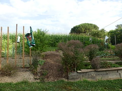Jardin landais (delphinecingal) Tags: cagnotte landes jardin garden