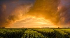 Party (Ellen van den Doel) Tags: sky rain storm graan color nature nederland netherlands regen thunder outdoor cloud 2019 natuur field kleur juni sunset goeree thunderstorm overflakkee