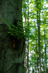 Untitled... (Krystian38) Tags: green forest tree trees nature mountains plants fern polypodiaceae outside outdoor poland polska