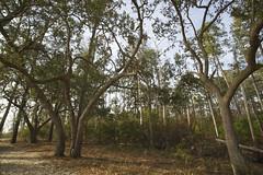 Goose Creek State Park (Modkuse) Tags: goosecreekstatepark innerbanksnorthcarolina northcarolina nc nature natural art artphotography artistic artisticphotography photoart trees treescape nikon nikondslr nikond700 tokina2035mmf3545 winter wintercolor winterlandscape