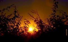Quarta-sunset (sonia furtado) Tags: quartasunset sunset pds pordosol contraluz martins rn ne brasil brazil soniafurtado