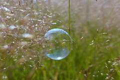 light, air, silence,   enjoy life (S.Garten) Tags: thebeautyofnature magicmoment ilovenature grass green light sun nature landscapes bubble soapbubble wind