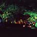 Night under the Trees