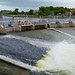 THE SALMON WEIR IN GALWAY [PHOTOGRAPHED AUGUST 2016]-154404