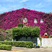 Bougainvillea House II